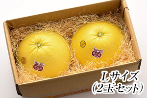 八代亜紀さんオススメ!晩白柚(L)2玉セット の説明画像