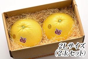 八代亜紀さんオススメ!晩白柚(2L)2玉セット の説明画像